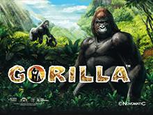 Gorilla в Вулкане Удачи