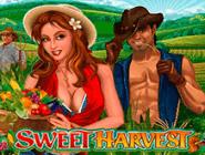 Сладкий Урожай: бунусы и акции в Вулкане